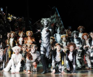 CATS Auckland